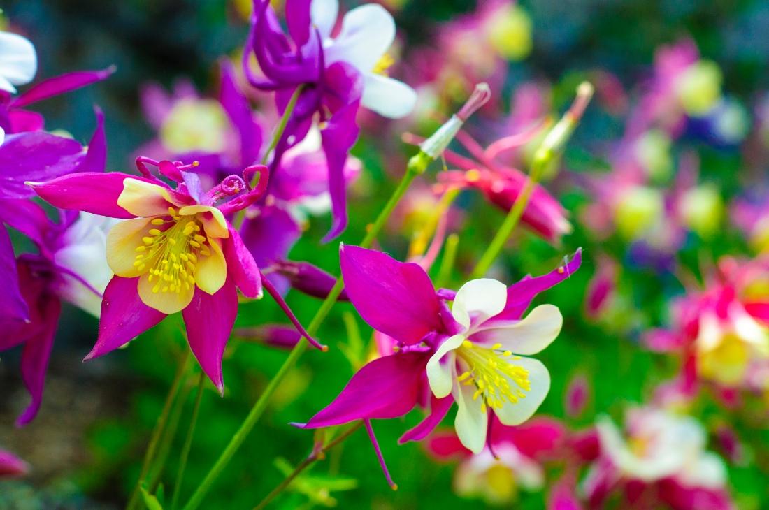 Flowers at Bloom.jpg