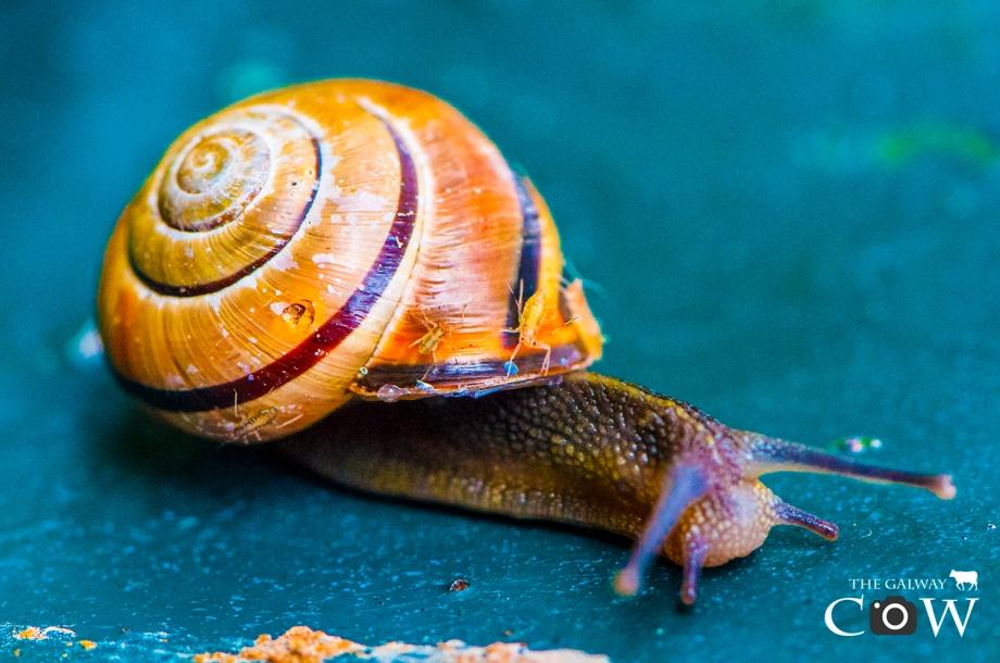 snail-taxi